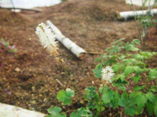20140914・フラワーパーク植物20