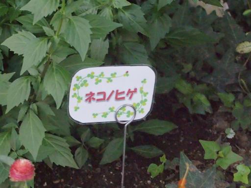 20140914・フラワーパーク植物29