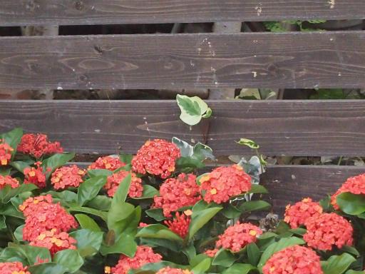 20140914・フラワーパーク植物34