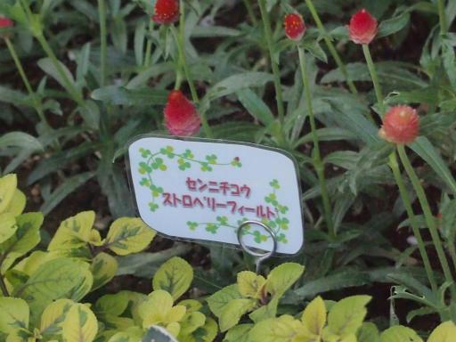 20140914・フラワーパーク植物31