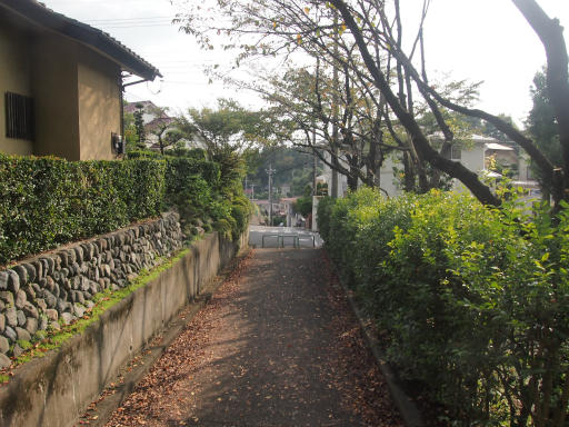 20141012・狭山湖1-10