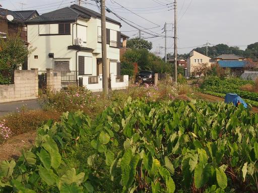 20141012・狭山湖1-18