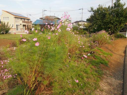 20141012・狭山湖2-04