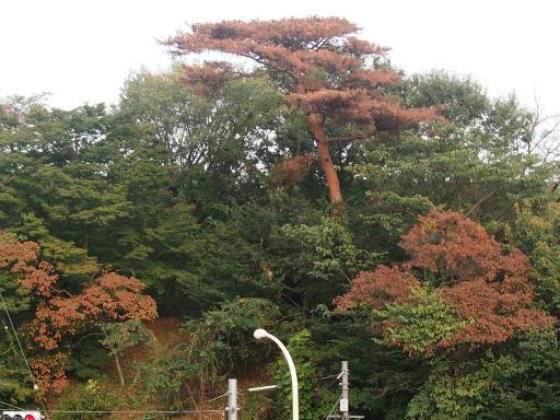 20141012・狭山湖3-02