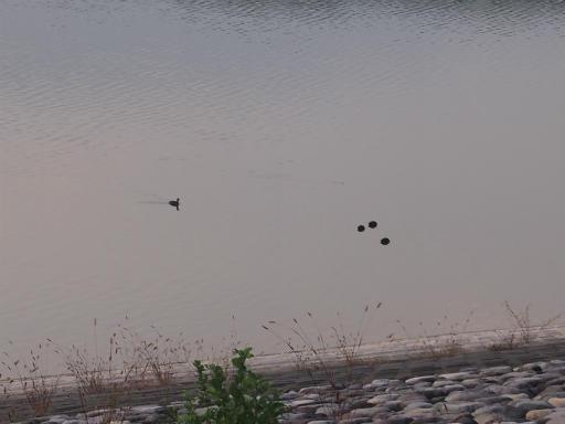 20141012・狭山湖3-24