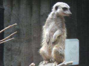zoo12miia.jpg