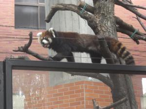 zoo13resa.jpg