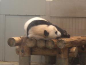 zoo2panda.jpg