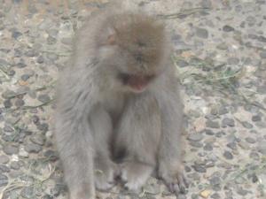 zoo4saru.jpg