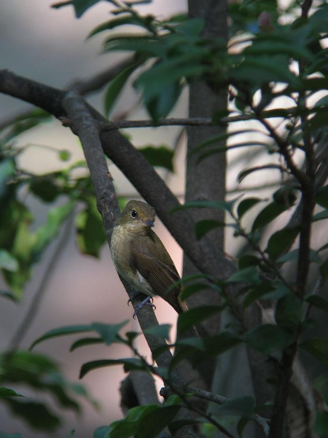 kibi2011091005.jpg