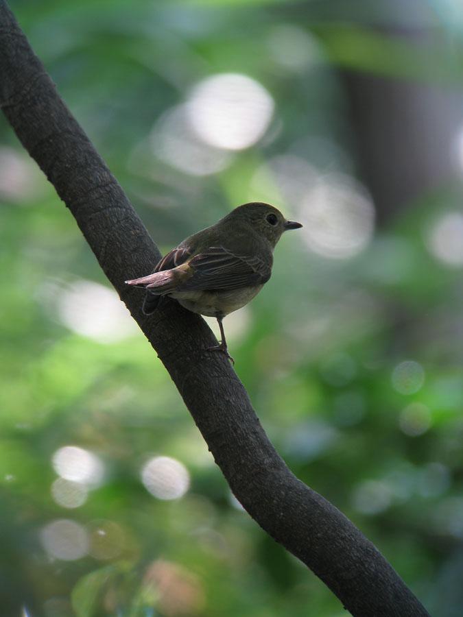 kibi2011100804.jpg