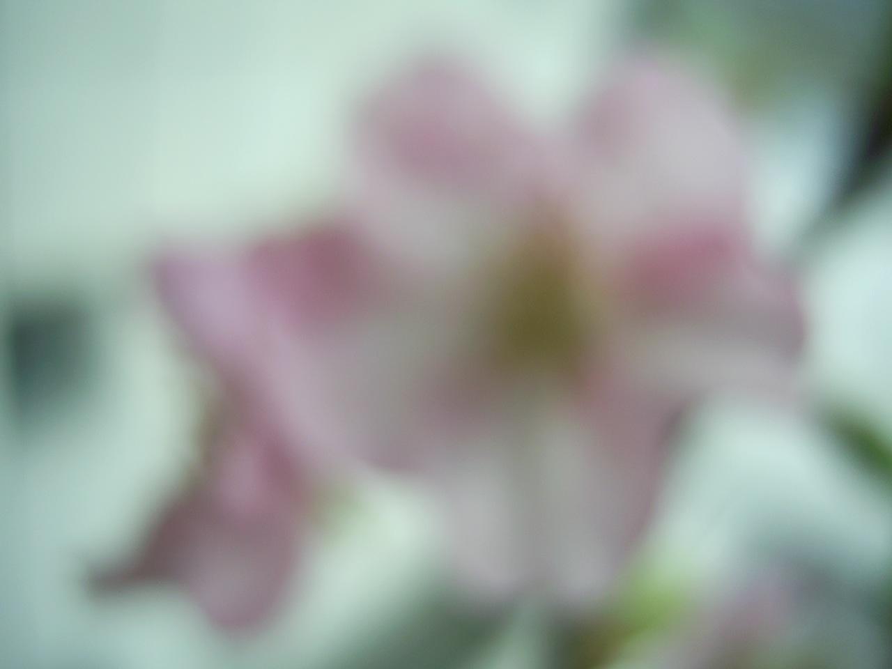PIC_0116.jpg