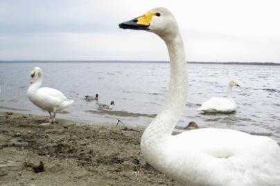 ウトナイ湖5