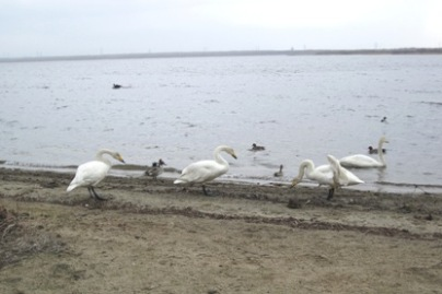 ウトナイ湖3