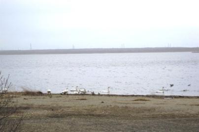 ウトナイ湖2