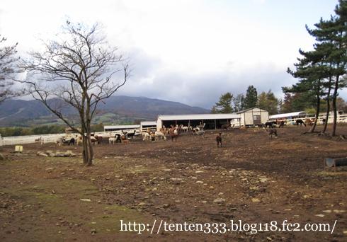 アルパカ牧場-4_e