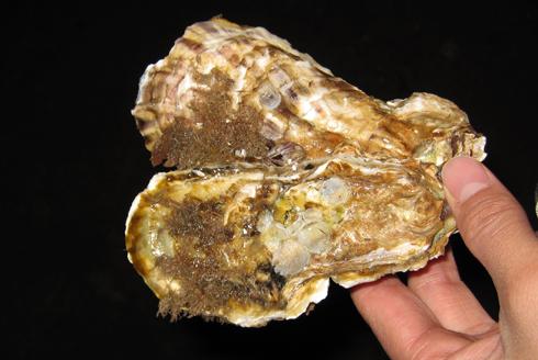 焼き牡蠣-3