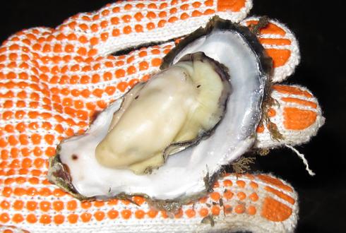 焼き牡蠣-4
