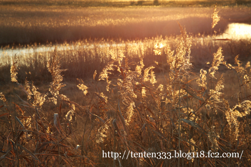 涛沸湖-6_e