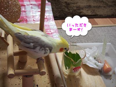 野菜を食べる!
