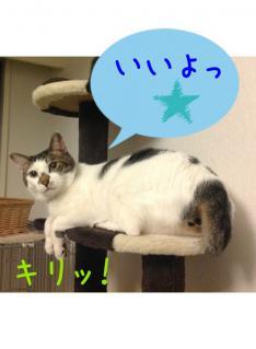 image_20130303222457.jpg
