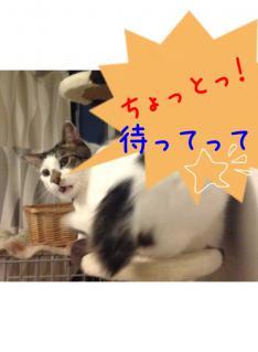 image_20130303222458.jpg