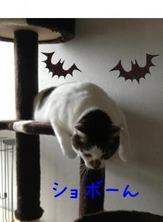 image_20130324234907.jpg
