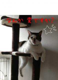 image_20130324234911.jpg