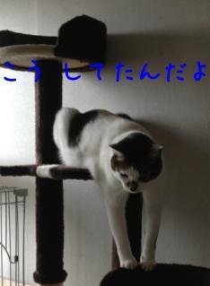 image_20130324234912.jpg