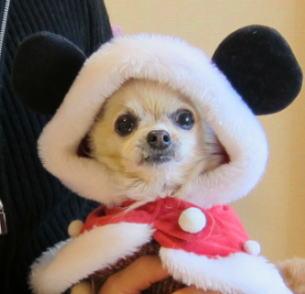 ミッキーな犬