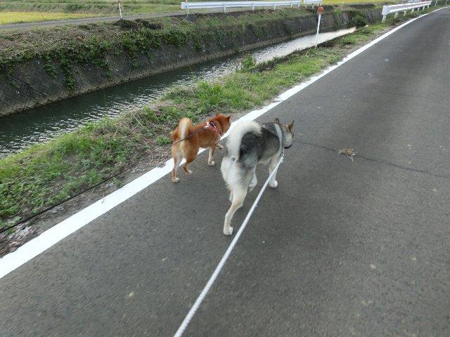 仲良く散歩