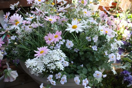 T's Garden Healing Flowers‐春のパステル色