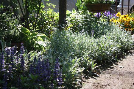 T's Garden Healing Flowers‐実家の庭