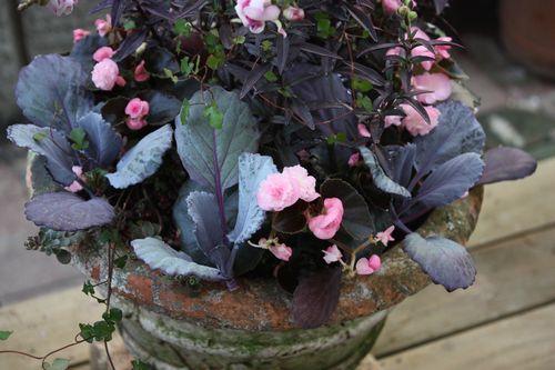 T's Garden Healing Flowers‐キンギョソウ・ブロンズドラゴンの寄せ植え