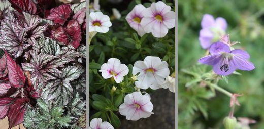 T's Garden Healing Flowers