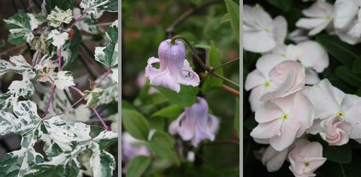 T's Garden Healing Flowers‐入荷品