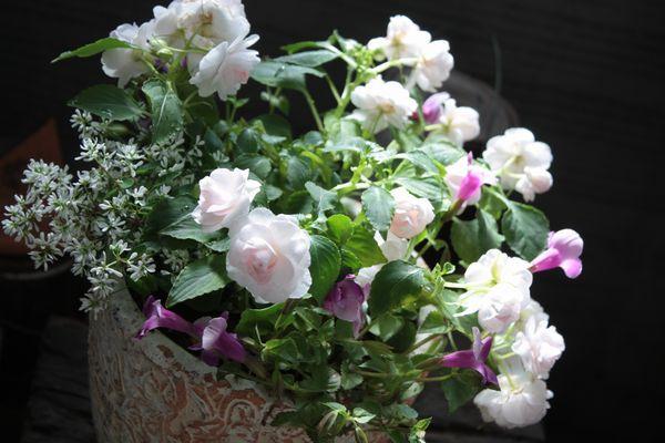 バラ咲き八重インパ・シルエットの寄せ植え