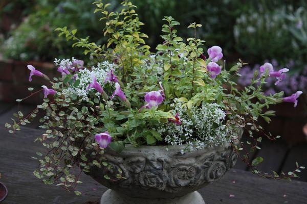 T's Garden Healing Flowers‐本日の入荷品