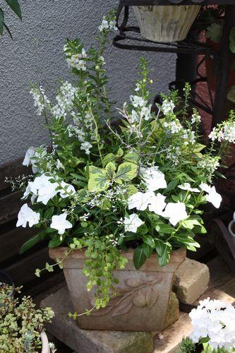 T's Garden Healing Flowers‐白い寄せ植え