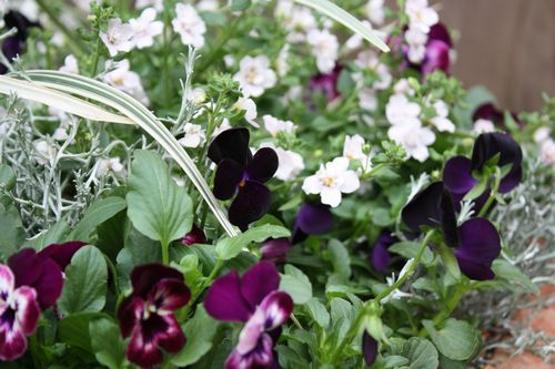 T's Garden Healing Flowers‐2010秋最初の寄せ植え
