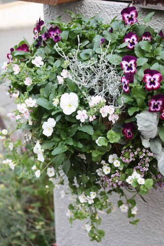 T's Garden Healing Flowers‐V.ミッドナイトのハンギング