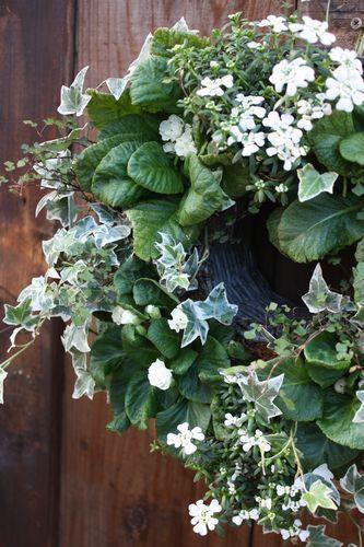 T's Garden Healing Flowers‐バラ咲ジュリアンとイベリスの白いリング