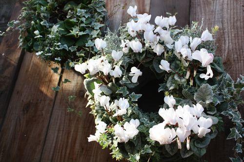 T's Garden Healing Flowers‐二つの白いリング