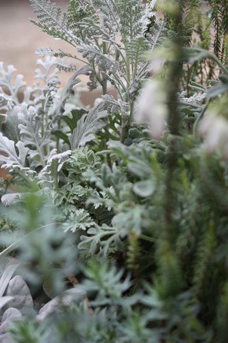 T's Garden Healing Flowers‐シルバーリーフの寄せ植え