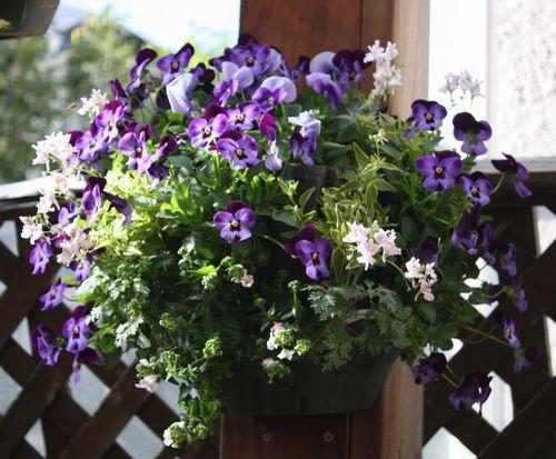 T's Garden Healing Flowers‐V・デニムジャンプアップでハンギング