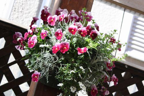 T's Garden Healing Flowers‐P・ナチュレ・ローズPでハンギング