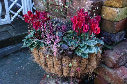 T's Garden Healing Flowers‐Gシクラメンの壁掛け