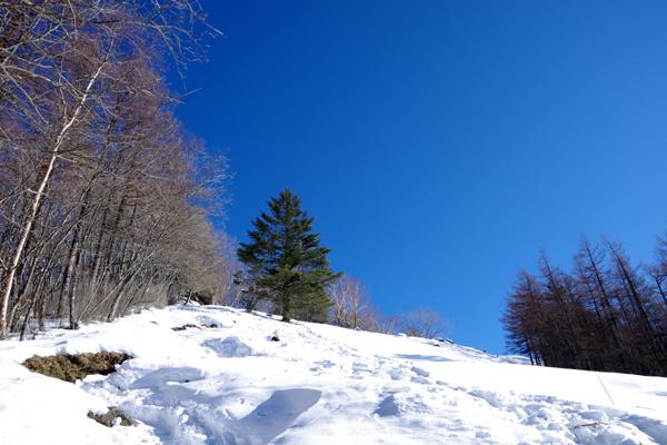雲取山27