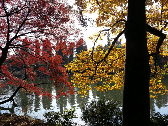 wall_紅葉と池