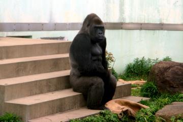 福岡市動物園10